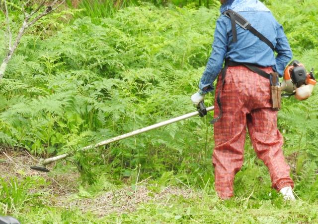 秋田市で草刈りにかかる料金相場は?追加料金や業者選びのコツまで解説