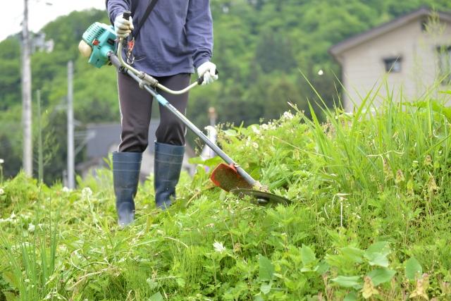 秋田市で草刈りに最適な年3回の時期~楽に草刈りを終えるコツまで徹底解説